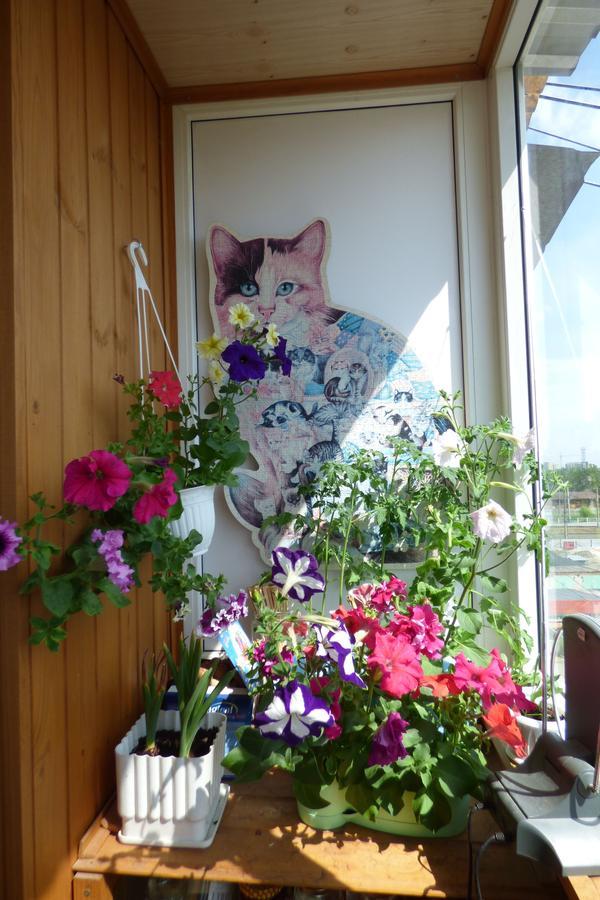Хочу создать цветущую клумбу на балконе - страница 6.