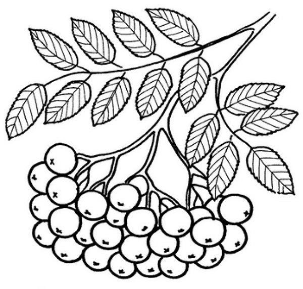 картинки шаблоны листья