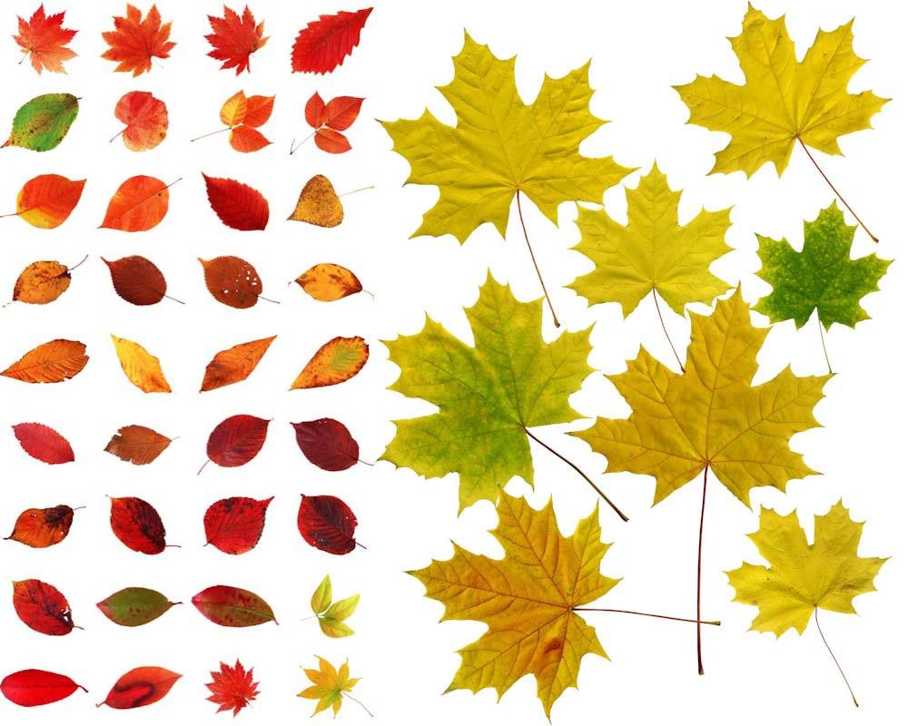 картинки листьев для вырезания распечатать цветные эти деньги тогда